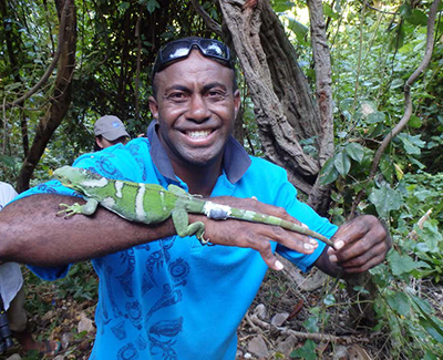Monuriki Ranger, Jhaba Vadada, preparing to release a captive-hatched iguana with telemetry unit attached back to Monuriki. Jhaba is in his second year working as a Ranger. The Monuriki Island Ranger Program was started with a Disney Conservation Fund grant to the IIF in 2015. Photo by Robert Fisher.