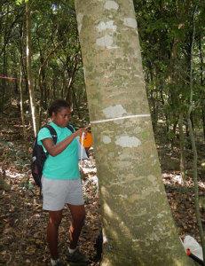 Yadua Taba Yolarnie Measuring Tree Peter Harlow