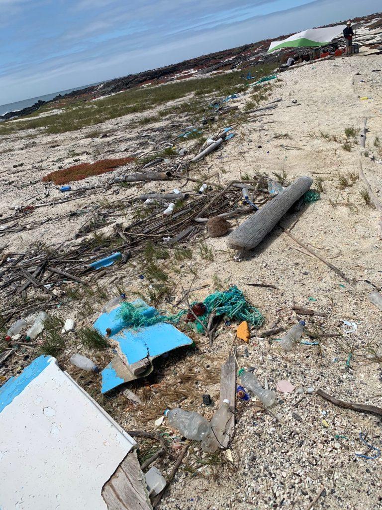 A polluted site on San Cristóbal island (Caleta del Parque) were we sampled marine iguana scats © Juan Pablo Muñoz-Pérez,