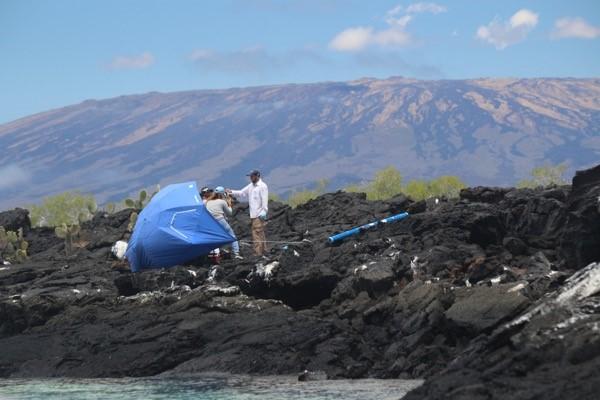 Temporary field camp/ marine iguana sample station on the volcanic shoreline of Punta Moreno, western Isabela island with the awesome Wolf Volcano in the backdrop © Greg Lewbart