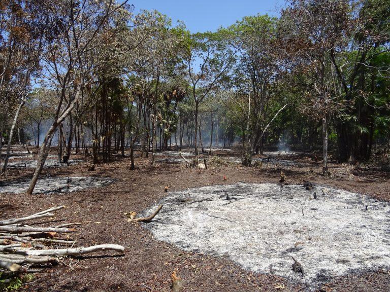 Mangrove habitat being burned for development on Utila– Tom Brown