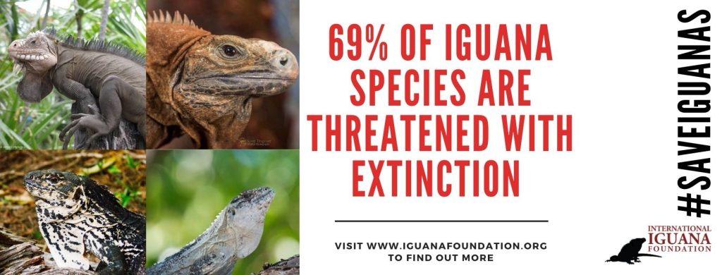 69% iguanas are threatened
